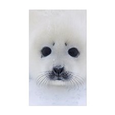 Harp Seal pup on ice Decal