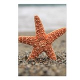 Starfish besides sea shor Postcards (Package of 8)