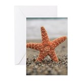 Starfish besides sea sho Greeting Cards (Pk of 10)