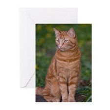 Ginger cat Greeting Cards (Pk of 20)
