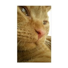 Ginger Tabby cat just wa Decal