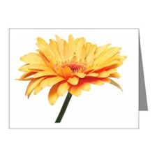 Close up of a gerbera Note Cards (Pk of 10)