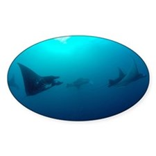 Manta Rays swim in the current in t Decal