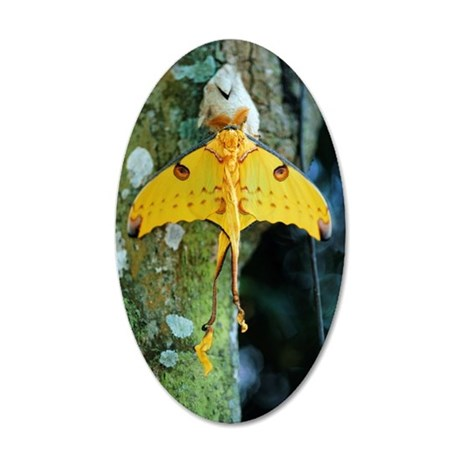 Luna Moth on Tree Trunk 35x21 Oval Wall Decal