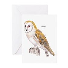 Barn Owl Bird Greeting Cards (Pk of 10)