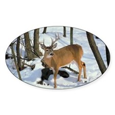 Deer in winter Decal