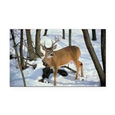 Deer in winter Rectangle Car Magnet