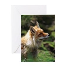 Fox standing  looking upwards Greeting Card