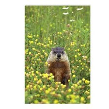 Groundhog in field of wil Postcards (Package of 8)