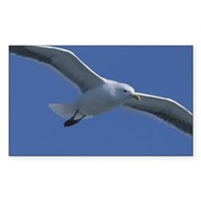 Seagull flying in blue sky Decal