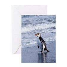 ROYAL PENGUIN ON BEACH, MACQUARIE IS Greeting Card
