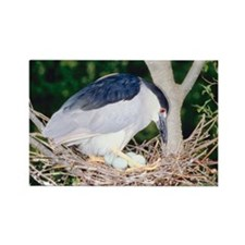 Heron sitting on nest Rectangle Magnet