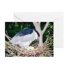 Heron sitting on nest Greeting Cards (Pk of 20)