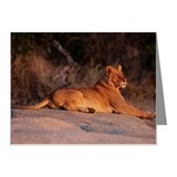 FEMALE LION ON ROCK LEDGE, B Note Cards (Pk of 10)