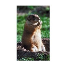 Prairie dog eating Decal