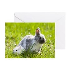 Dwarf Rabbits Greeting Cards (Pk of 20)