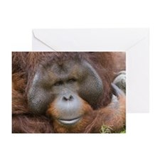 Orangutan, Taiwan, Taipe Greeting Cards (Pk of 20)