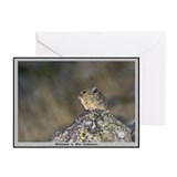 Pika (Rock Rabbit) Note Cards (Pk of 10)