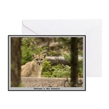 """""""Ghost Cat"""" Note Cards (Pk of 10)"""