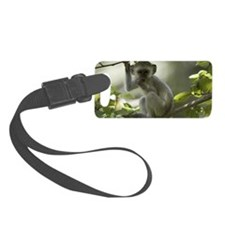 Vervet Monkey, Zimbabwe Small Luggage Tag