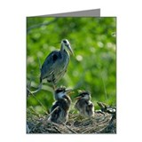 GREAT BLUE HERON AT NEST AT  Note Cards (Pk of 10)