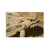 Flat-tailed horned lizard (Phryno Rectangle Magnet