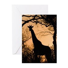 Giraffe (Giraffa camelop Greeting Cards (Pk of 20)