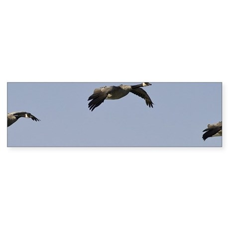 Group of geese flying Sticker (Bumper 50 pk)