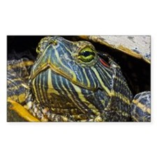 A red-eared slider turtle Decal