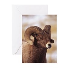 Close-up of bighorn shee Greeting Cards (Pk of 20)