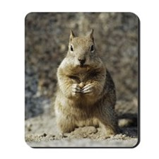 A squirrel holding a nut Mousepad