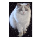 Unique Ragdoll cat art Postcards (Package of 8)