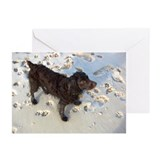 Cute Boykin Greeting Cards (Pk of 20)