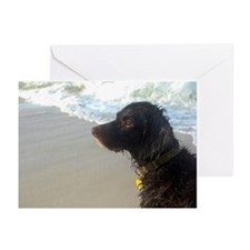 Funny Boykin spaniel Greeting Cards (Pk of 20)