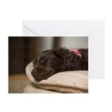 Unique Boykin spaniel Greeting Cards (Pk of 20)