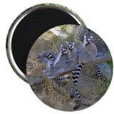 Lemur Line Magnet