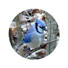 "Beautiful BlueJay 3.5"" Button (100 pack)"