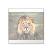Male African lion Rectangle Sticker