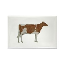 Guernsey Milk Cow Rectangle Magnet (10 pack)