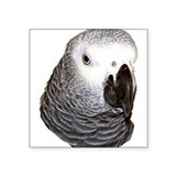 Congo African Grey Rectangle Sticker