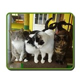 Cat Shelter Felix Mousepad