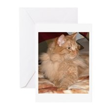 Orange Tabby Cat Greeting Cards (Pk of 10)