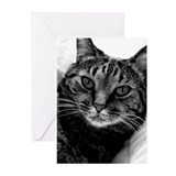 Zena Marie Cat Greeting Cards (Pk of 10)