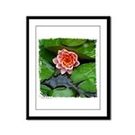 Water Lily Framed Panel Print