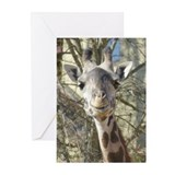 Femal Giraffe Greeting Cards (Pk of 20)