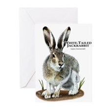 White-Tailed Jackrabbit Greeting Cards (Pk of 10)
