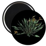 "Bird-of-Paradise Plant on a 2.25"" Magnet"