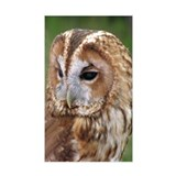 ...Tawny Owl... Rectangle Decal