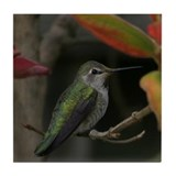 Tile Coaster - Hummingbird