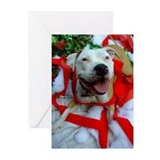 Christmas Bully Greeting Cards (Pk of 10)